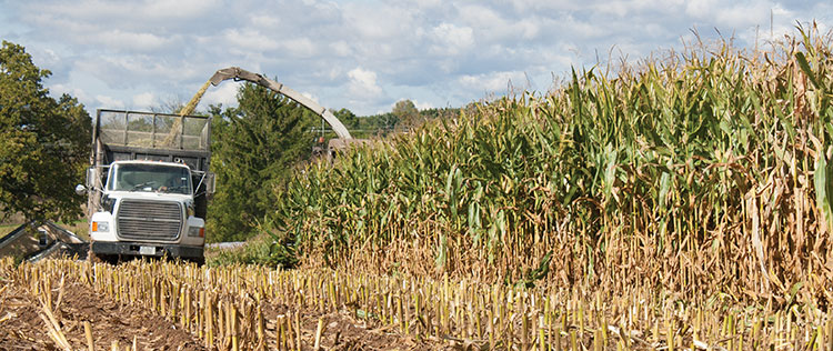 how to make corn silage