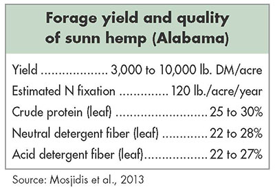 "Add more ""sunn"" to your summer 