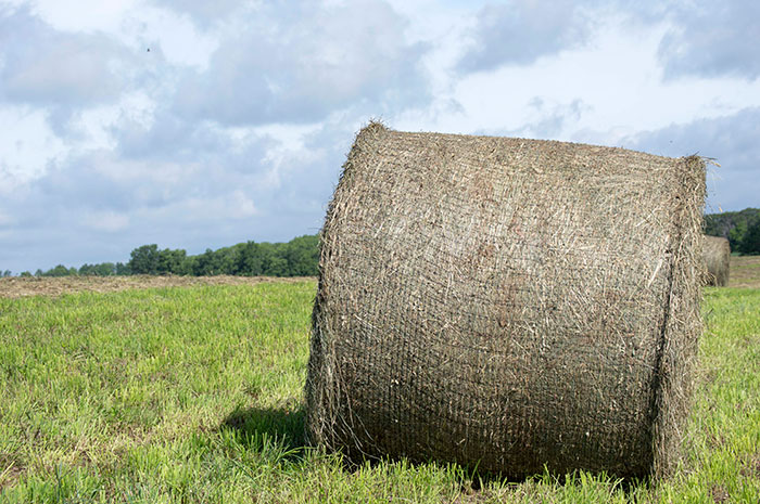 Weighing In On Bale Weights Hay And Forage Magazine