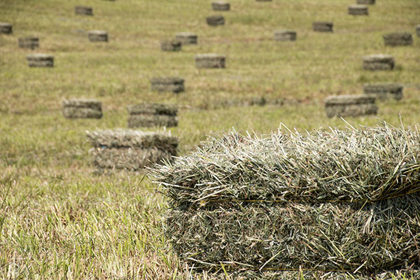 Image result for bales of hay in a field