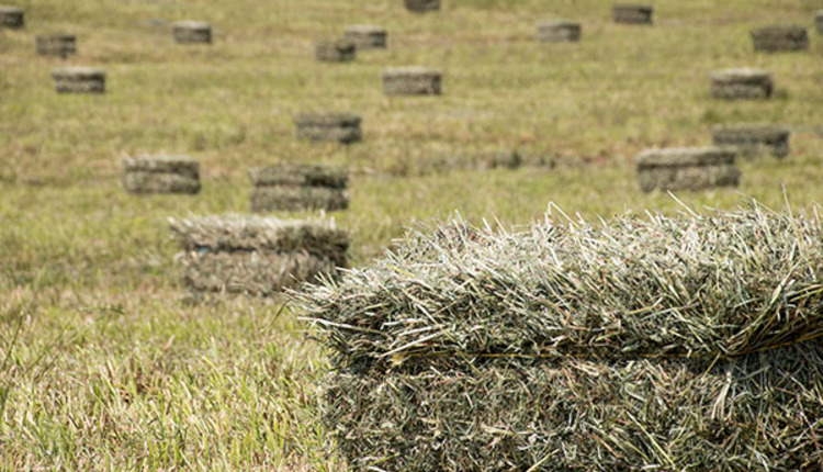 A New Day For Small Square Bales Hay And Forage Magazine - Bales