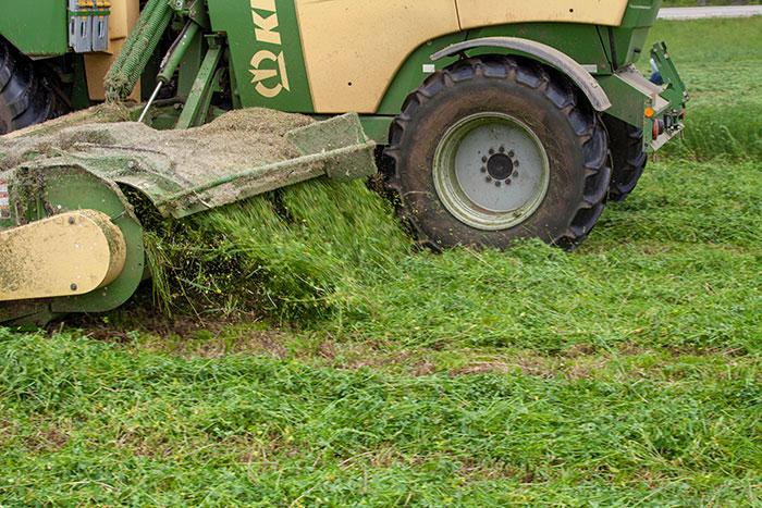 Alfalfa harvest considerations when dating