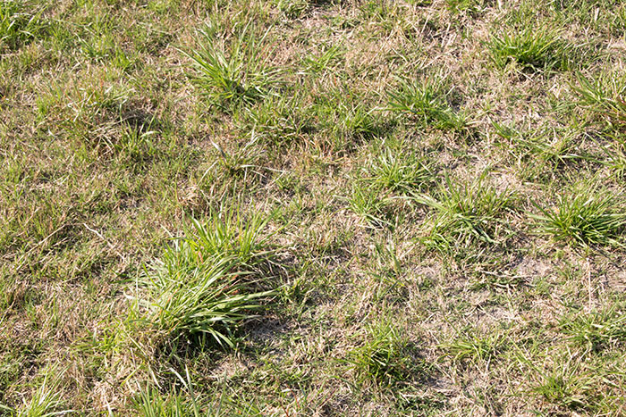 Control Winter Weeds For Better Pastures Hay And Forage