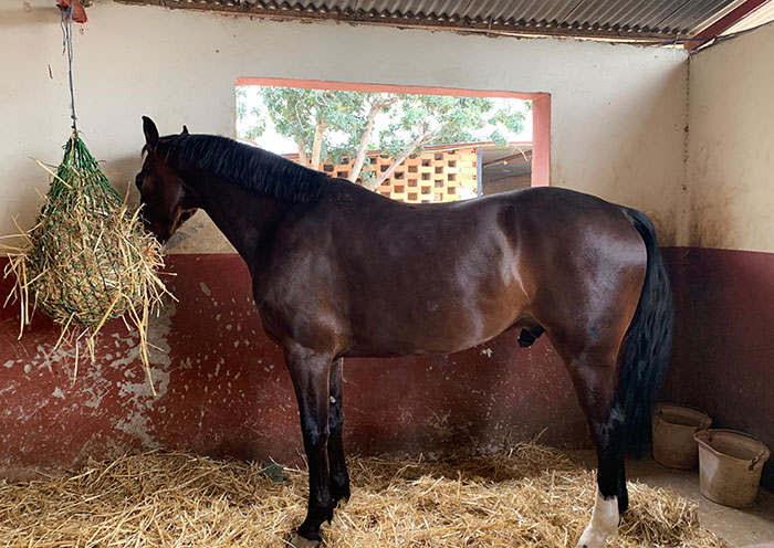 strategies for the stall-bound horse